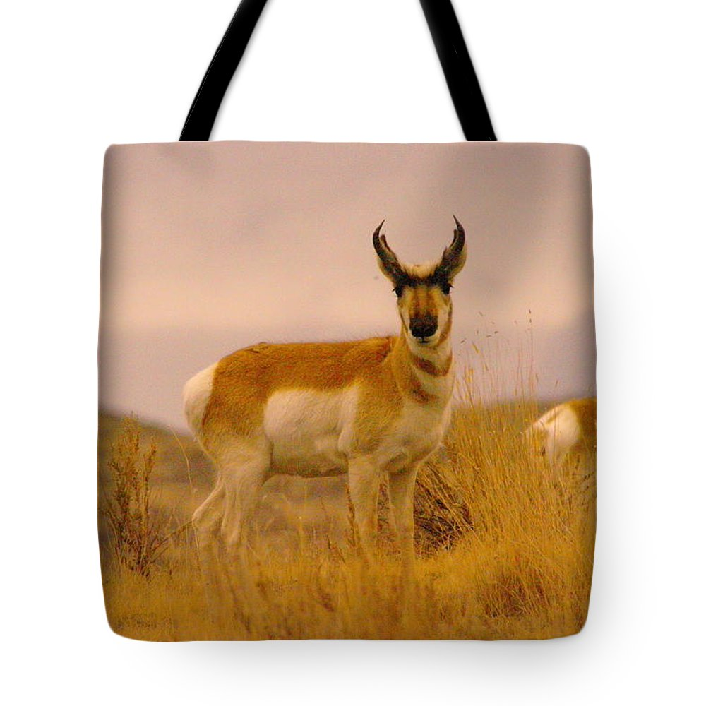 Pronghorn Tote Bag featuring the photograph Pronghorn by Jeff Swan