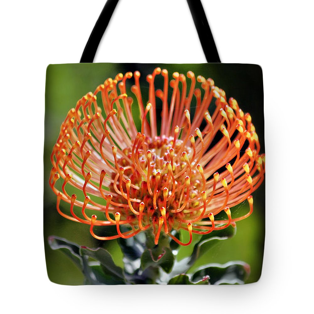 Protea Tote Bag featuring the photograph Protea - One Of The Oldest Flowers On Earth by Christine Till