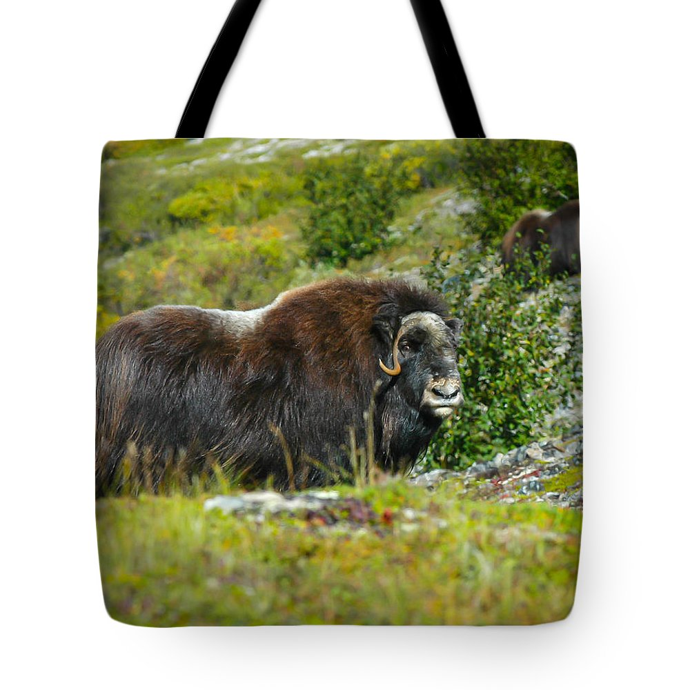 Muskox Tote Bag featuring the photograph Protecting Muskox by William Krumpelman