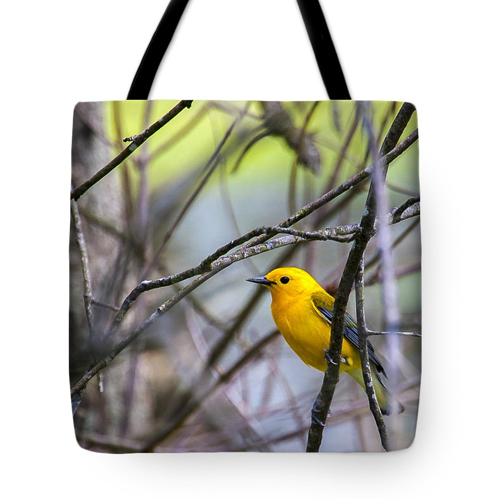 Animal Tote Bag featuring the photograph Prothonotary Warbler by Jack R Perry