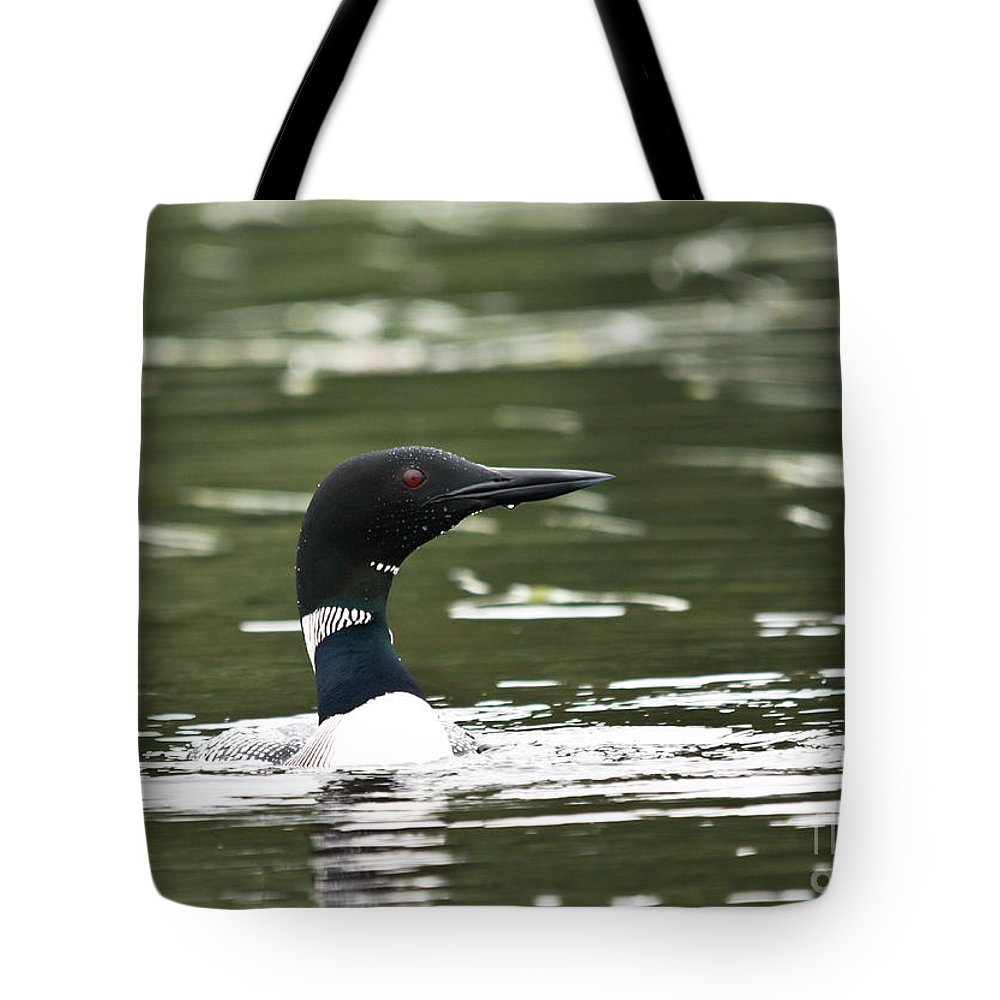 Common Loon Tote Bag featuring the photograph Proud Loon by Cheryl Baxter