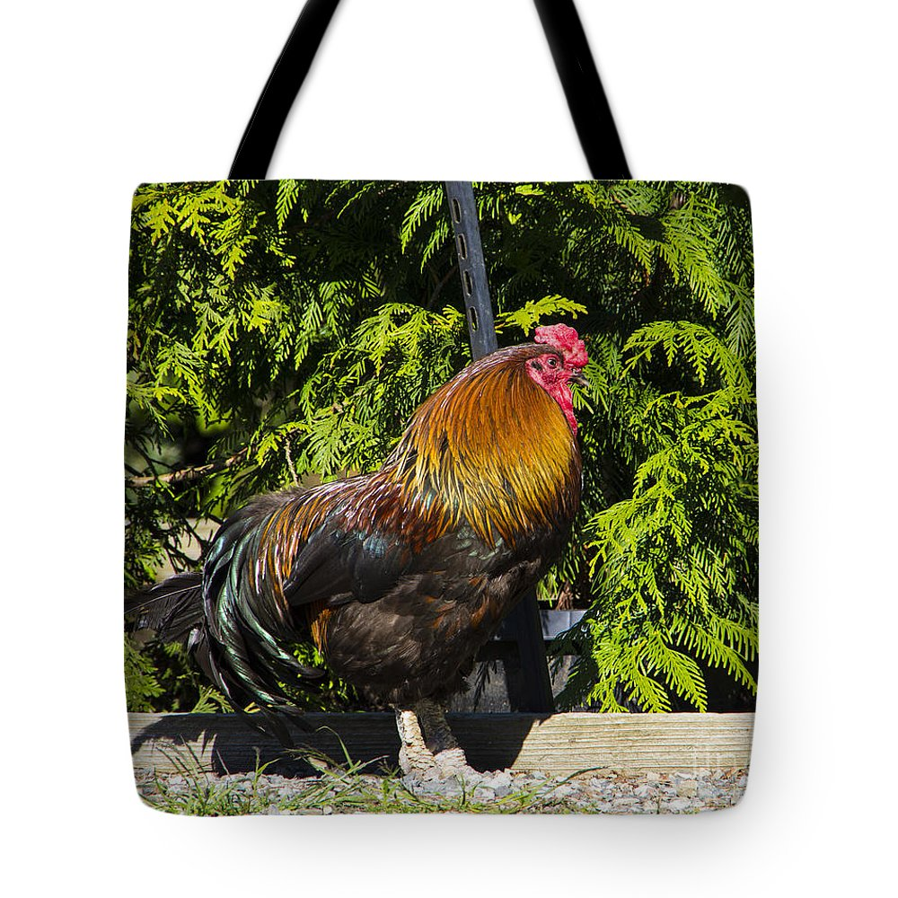 Rooster Tote Bag featuring the photograph Proud Rooster by Louise Magno