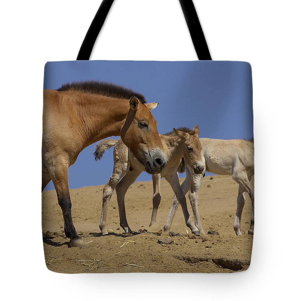 Feb0514 Tote Bag featuring the photograph Przewalskis Horse With Two Foals by San Diego Zoo