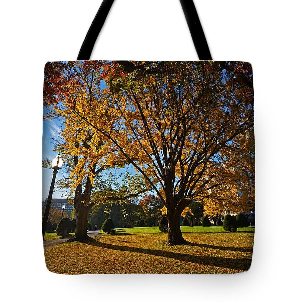 Boston Tote Bag featuring the photograph Public Garden Fall Tree by Toby McGuire