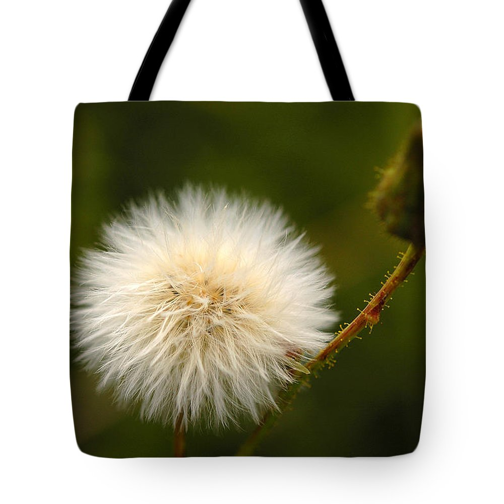 Dandelion Tote Bag featuring the photograph Wait by Catherine Ross