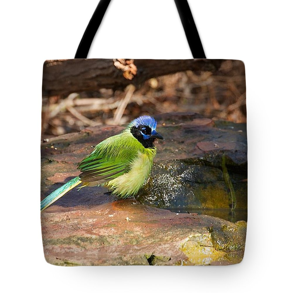 Green Jay Tote Bag featuring the photograph Puffy Green Jay by Stuart Litoff