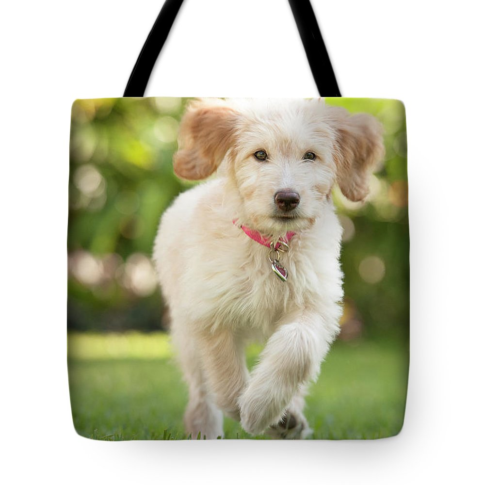 Pets Tote Bag featuring the photograph Puppy Running Through The Grass by Chris Stein