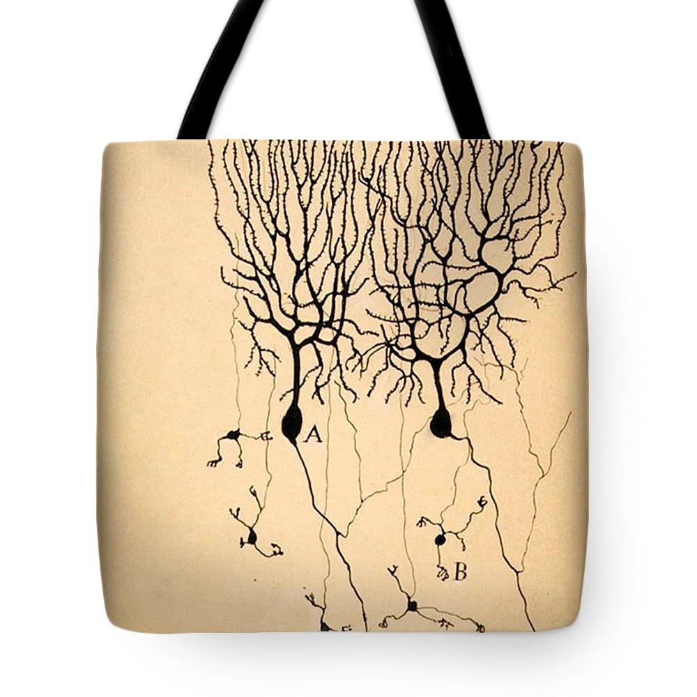 Santiago Ramon Y Cajal Lifestyle Products
