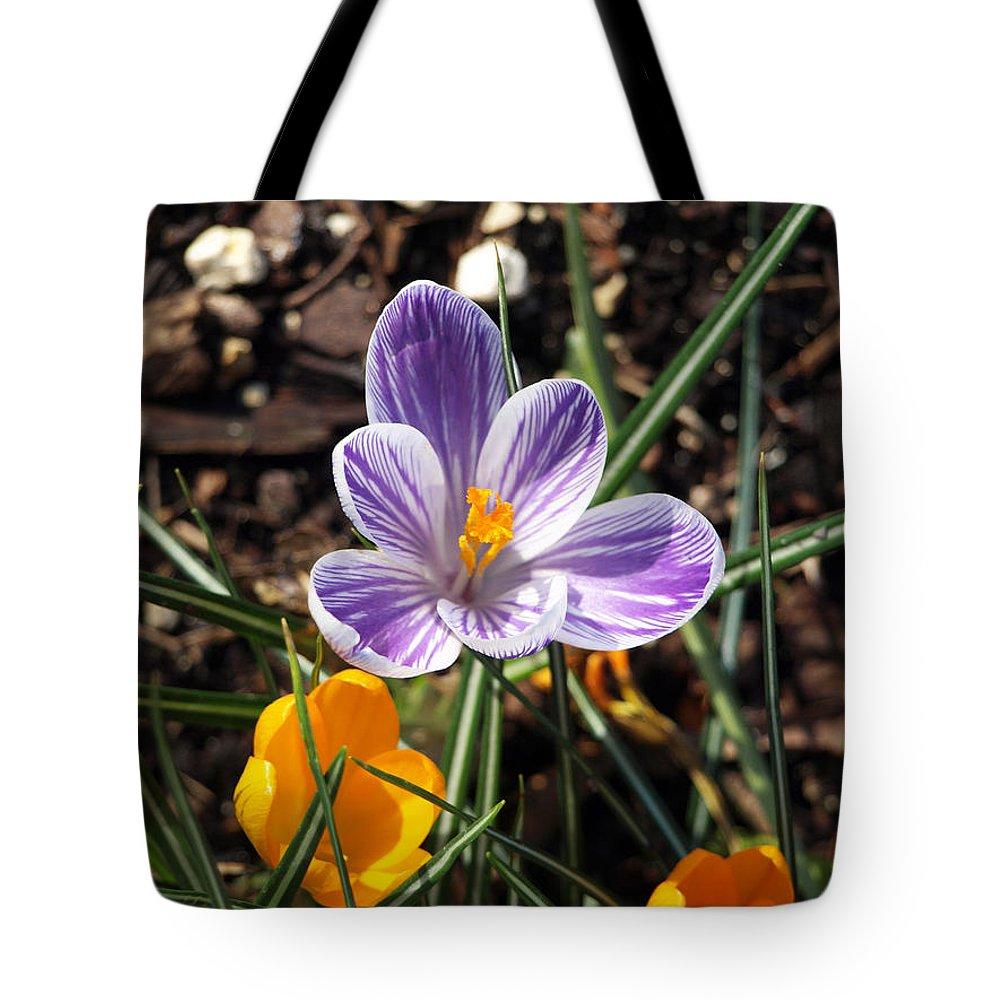 Purple And White Flower With Bright Orange Center And Orange Flower