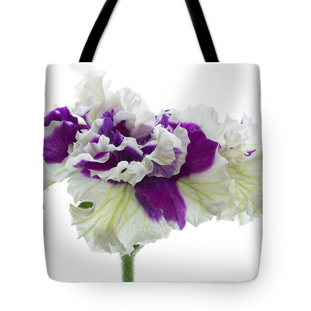 Petunia Tote Bag featuring the photograph Purple And White Frilly Petunia by Ann Garrett