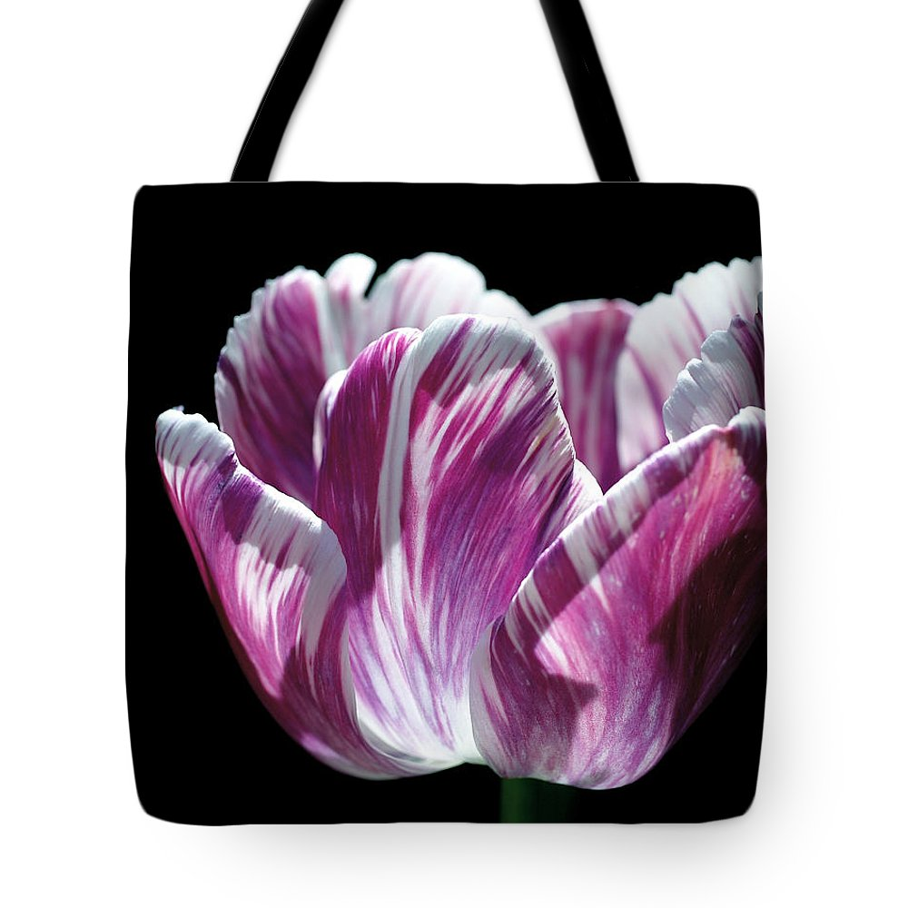 Tulip Tote Bag featuring the photograph Purple And White Marbled Tulip by Rona Black