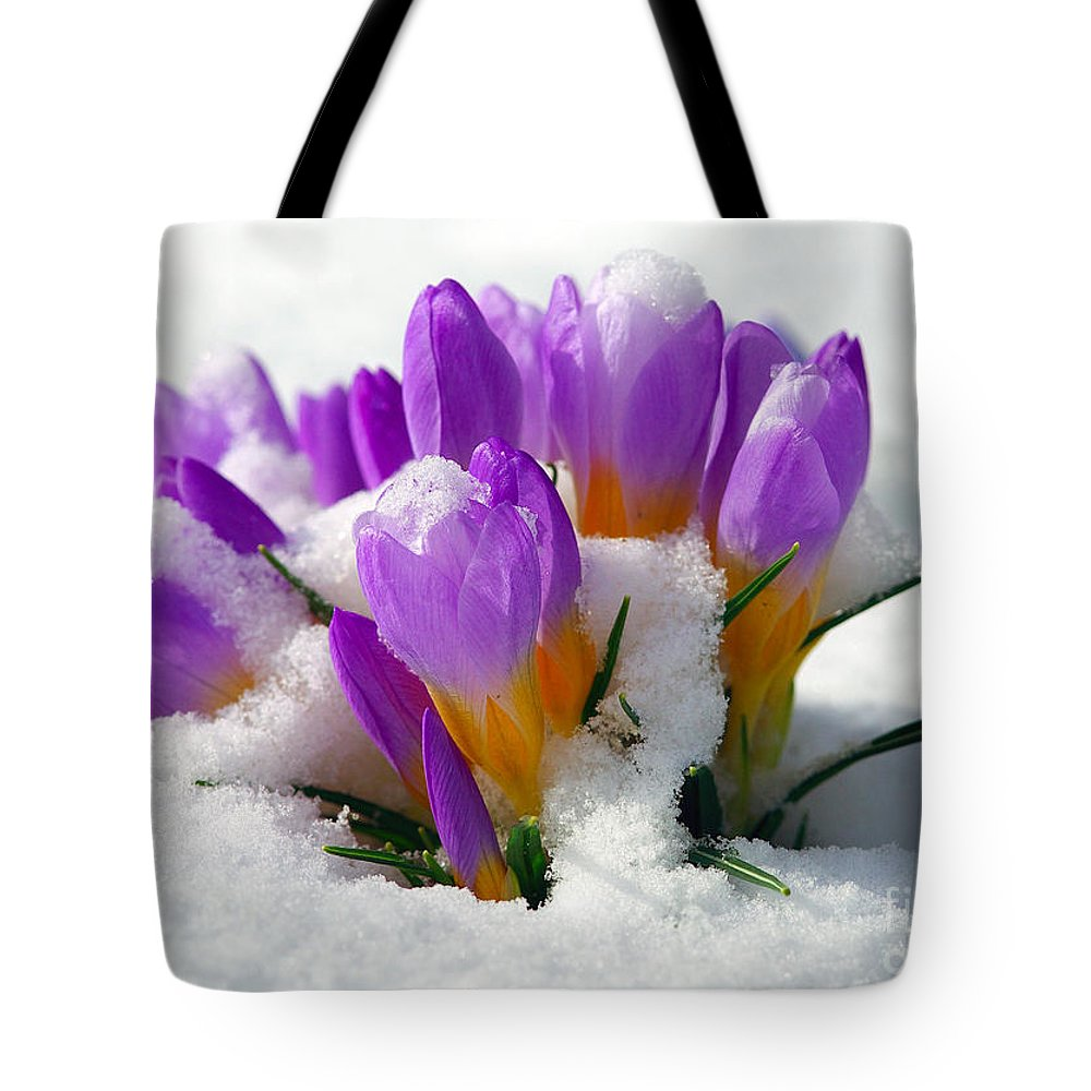 Crocuses Tote Bag featuring the photograph Purple Crocuses In The Snow by Sharon Talson