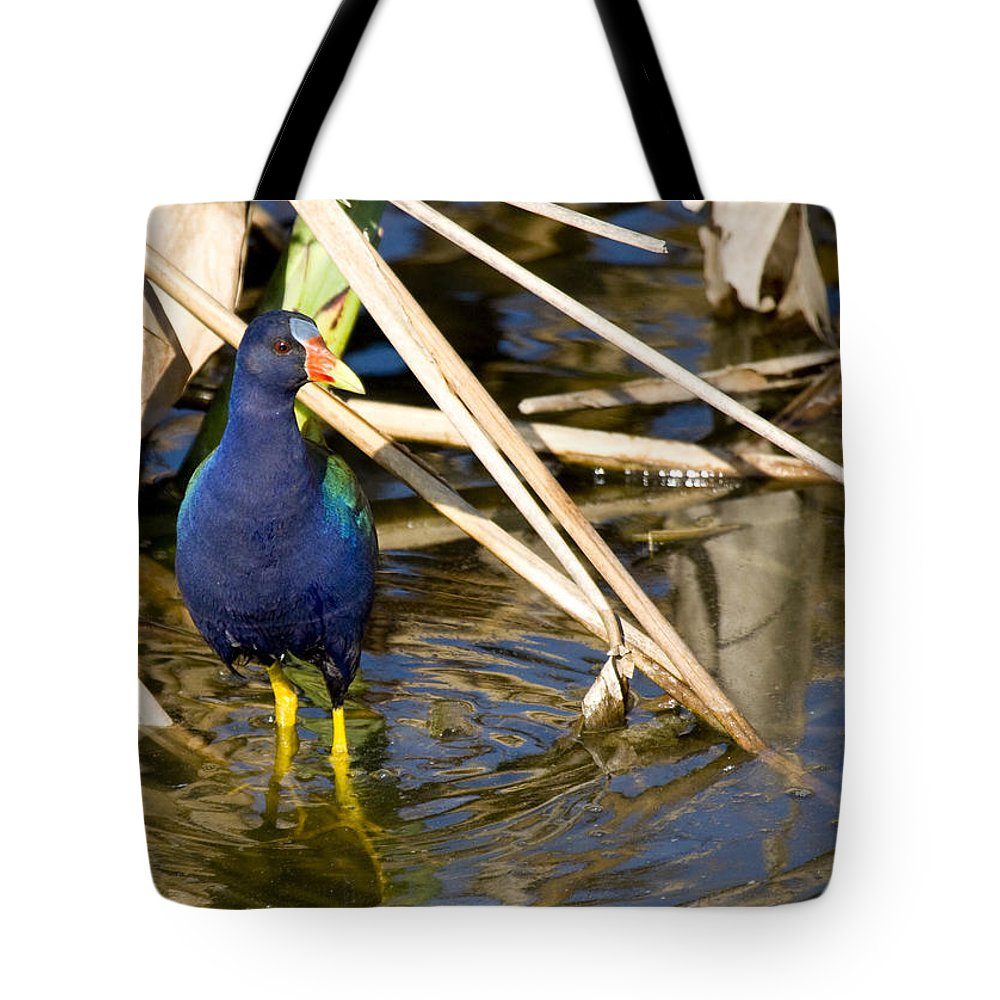 Purple Tote Bag featuring the photograph Purple Gallinule 4 by Sandy Swanson