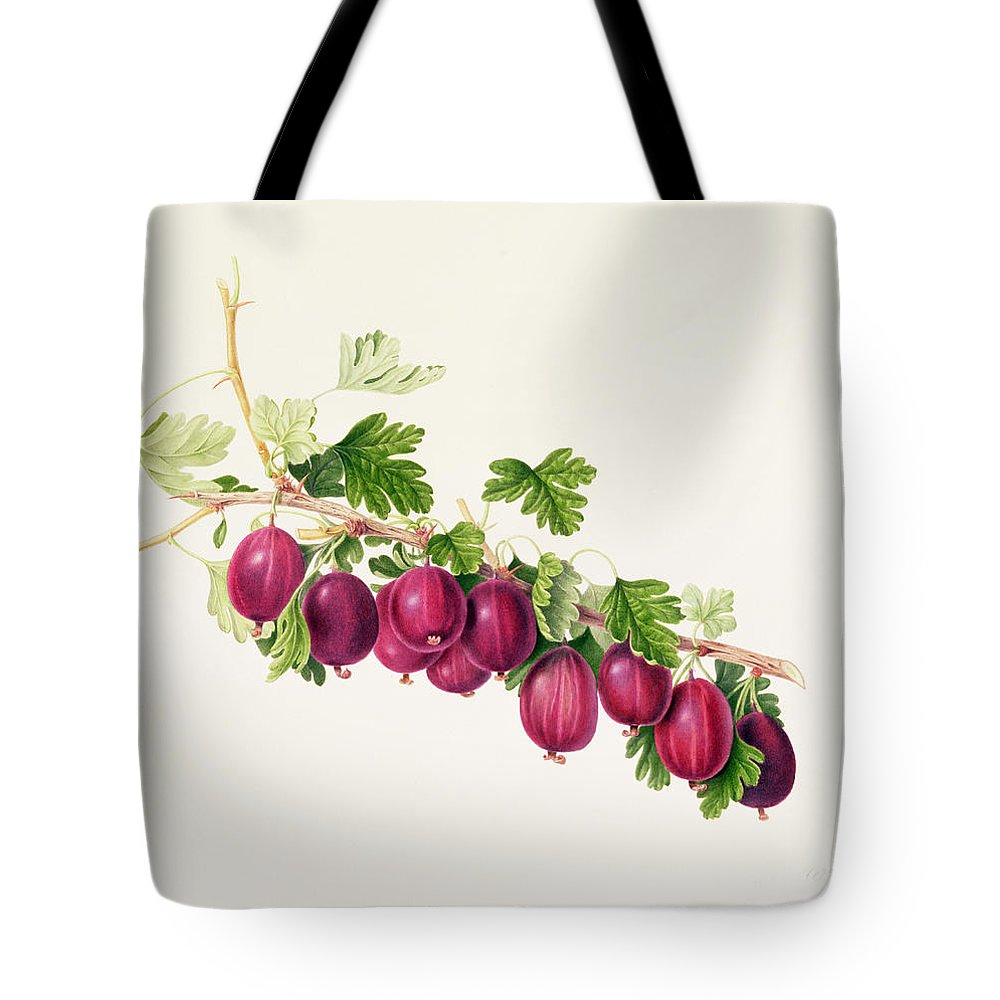 Gooseberries; Fruit; Branch; Leaves; Botanical Illustration Tote Bag featuring the painting Purple Gooseberry by William Hooker