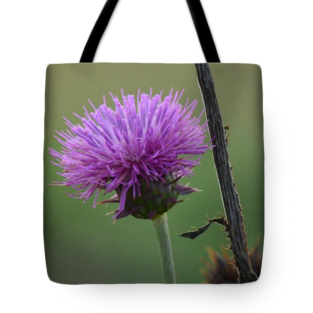 Purple In Nature Tote Bag featuring the photograph Purple In Nature by Maria Urso