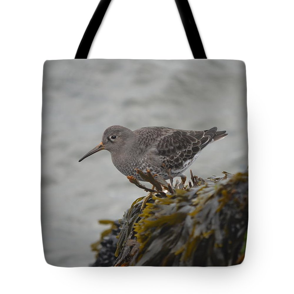Purple Sandpiper Tote Bag featuring the photograph Purple Sandpiper by James Petersen