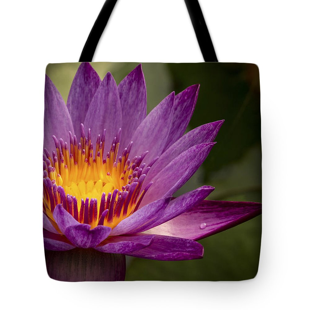 Pink Water Lily Tote Bag featuring the photograph Purple Tropical Water Lily by Jean Noren