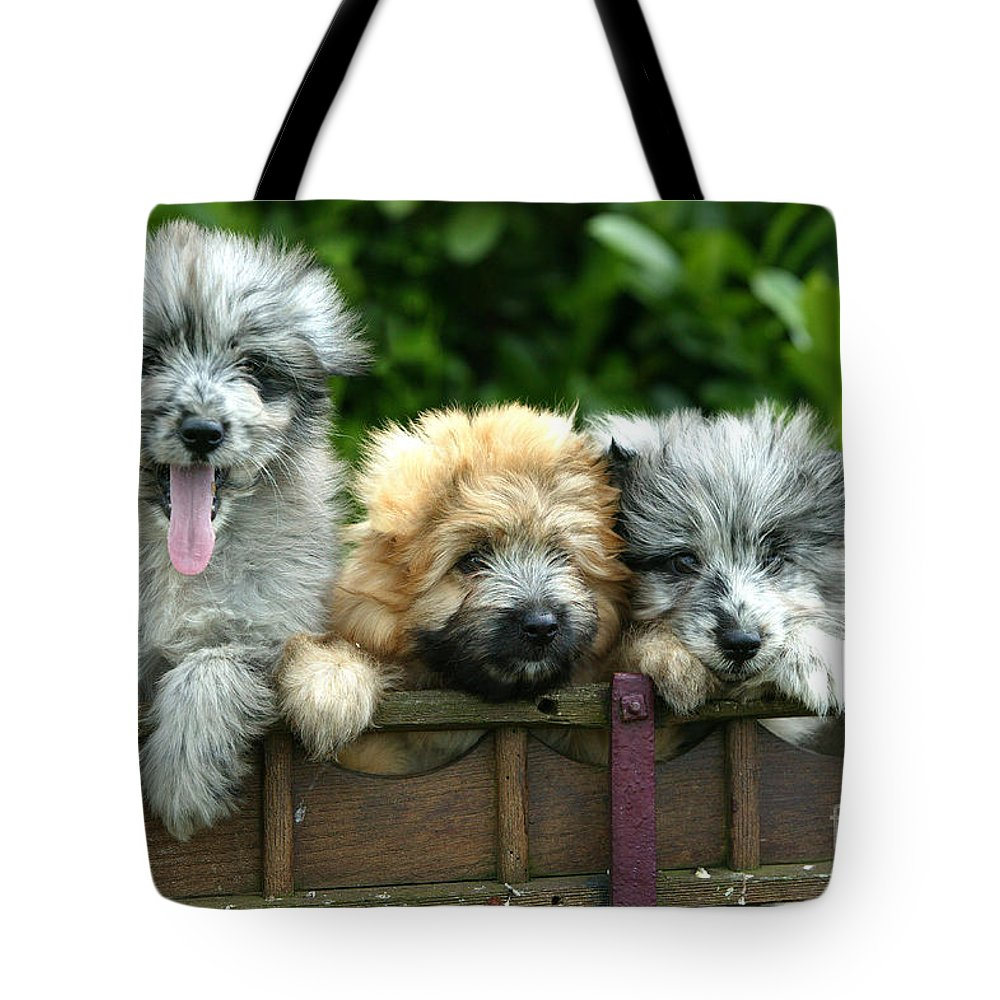 Little Pyrenean Sheepdog Tote Bag featuring the photograph Pyrenean Sheepdogs by Jean-Michel Labat