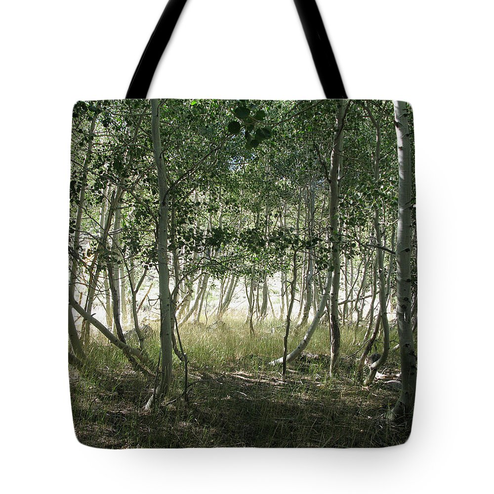 Aspen Tree Tote Bag featuring the photograph Quaking Aspen by Melinda Fawver