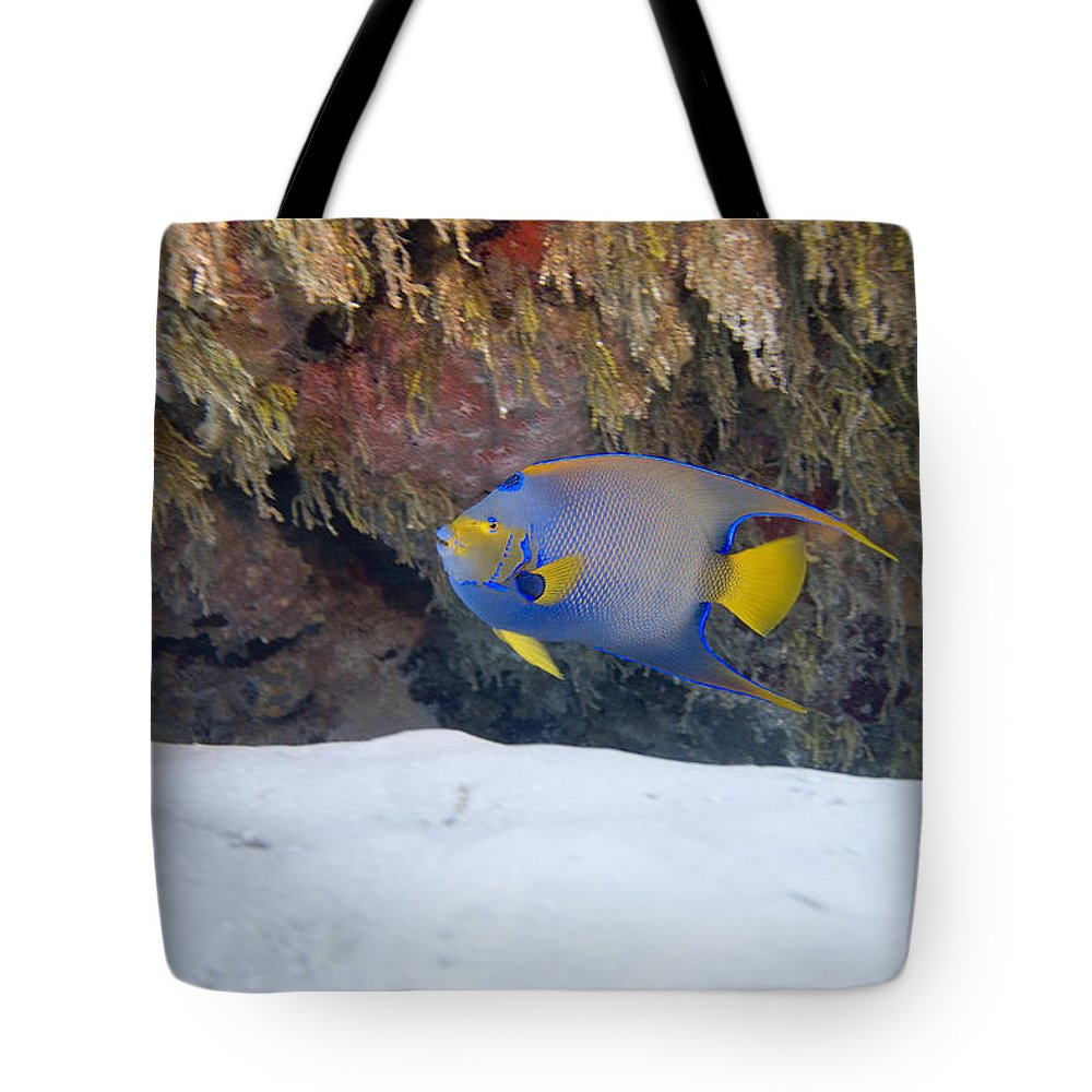 Queen Angel Tote Bag featuring the photograph Queen Angel by Jim Murphy