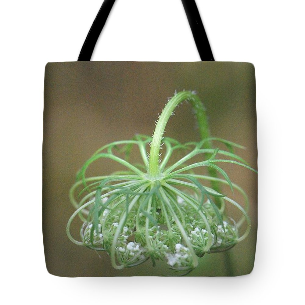 Queen Ann's Lace Tote Bag featuring the photograph Queen Ann's Lace by Amy Porter