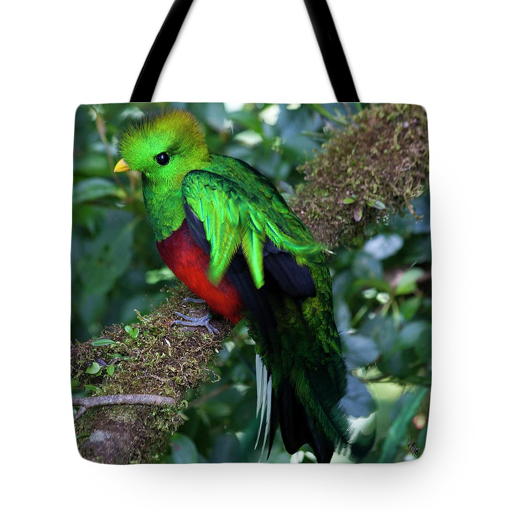 Bird Tote Bag featuring the photograph Quetzal by Heiko Koehrer-Wagner