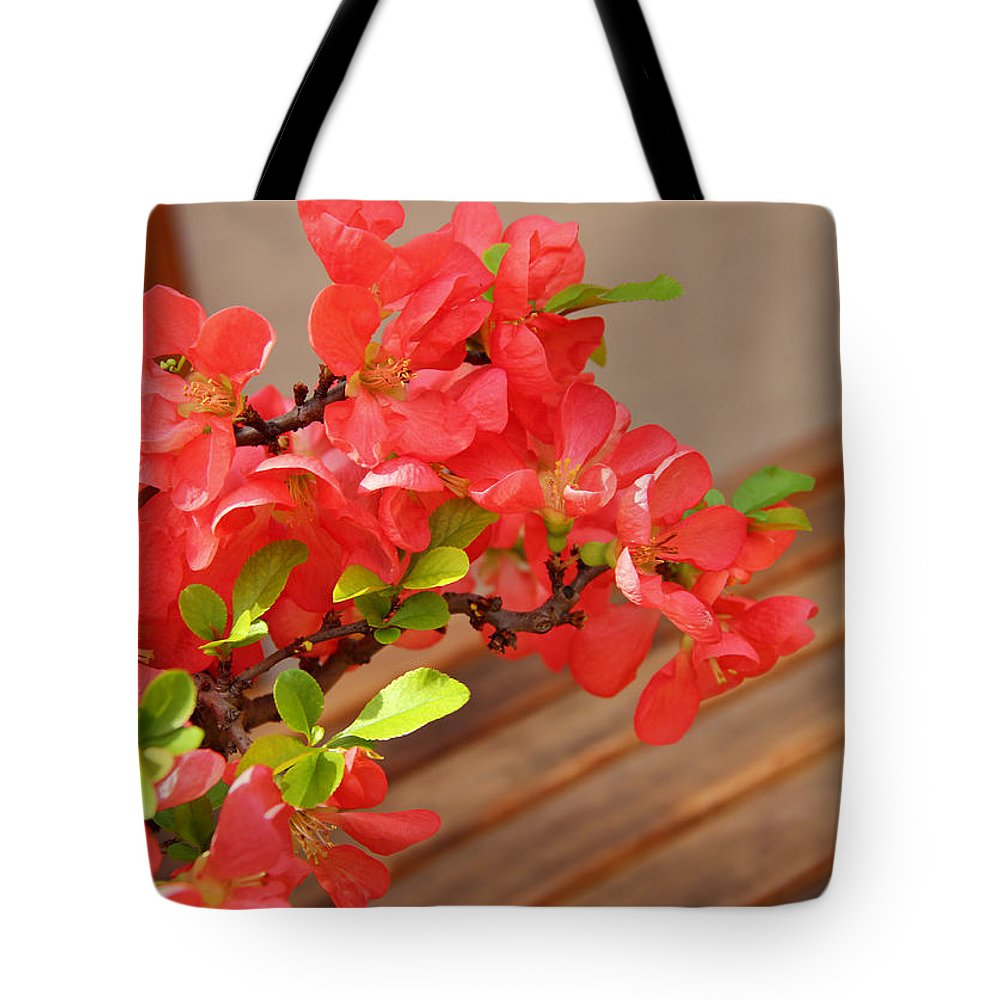 Quince Blossoms Tote Bag featuring the photograph Quince Blossoms by Rachel Cohen
