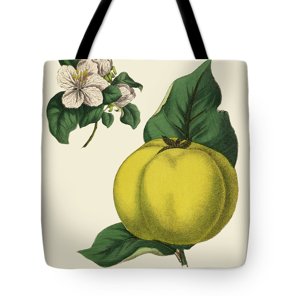 1880-1889 Tote Bag featuring the digital art Quince Fruit Tree, Victorian Botanical by Bauhaus1000