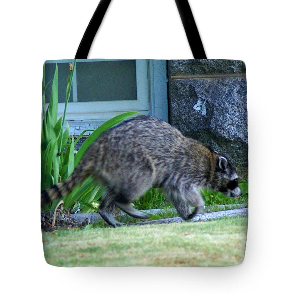 Raccoon Tote Bag featuring the photograph Raccoon In Flight by Ben Upham III