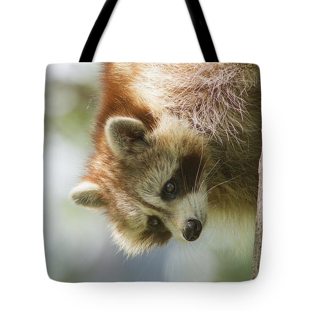 Banditos Tote Bag featuring the photograph Raccoon Portrait by Mircea Costina Photography