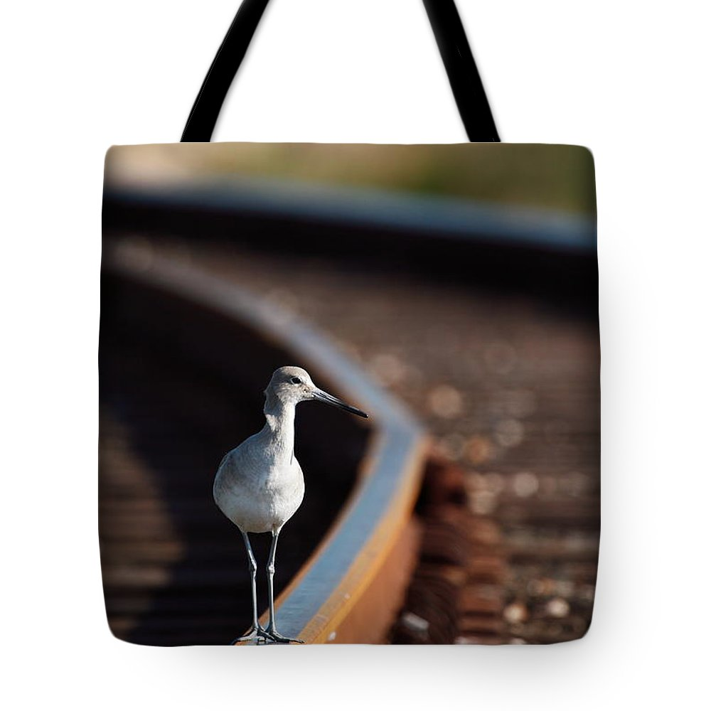 Willet Tote Bag featuring the photograph Railroaded Willet by Andrew McInnes