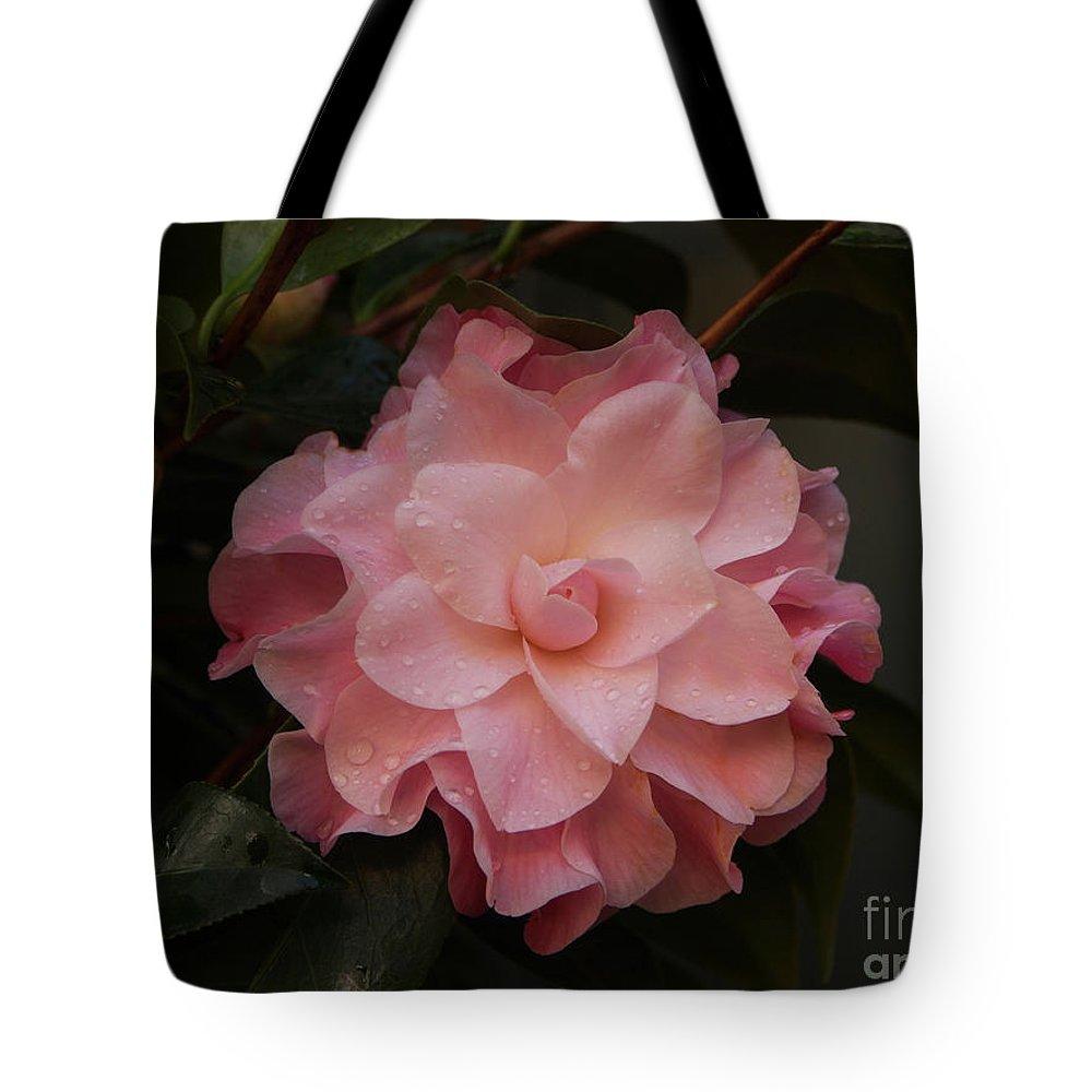 Rain Drops Tote Bag featuring the photograph Rain Kissed Camellia by Jacklyn Duryea Fraizer