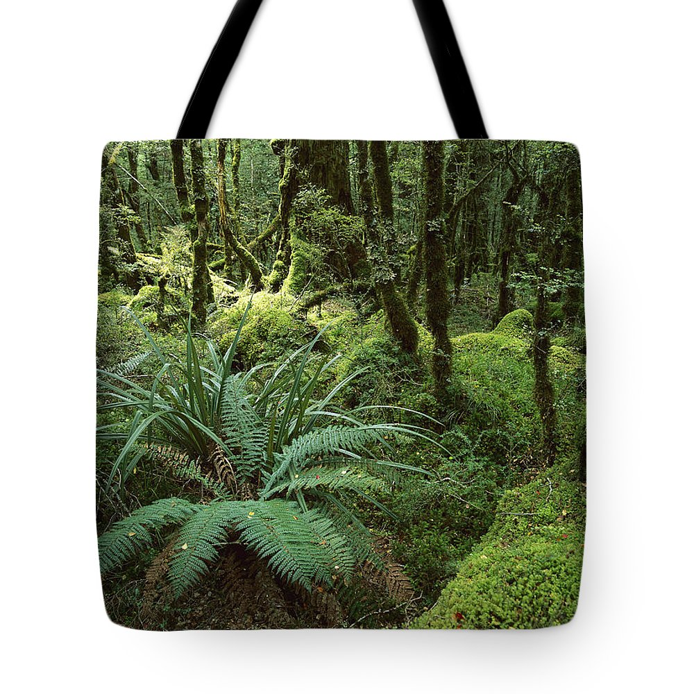 Color Image Tote Bag featuring the photograph Rainforest In Fjordland National Park by Konrad Wothe