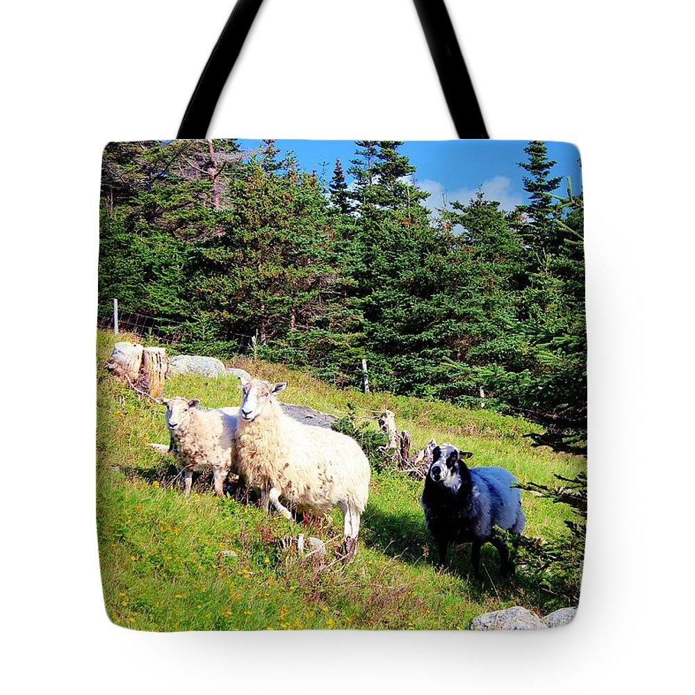 Ram And Ewes Tote Bag featuring the photograph Ram And Ewes by Barbara Griffin