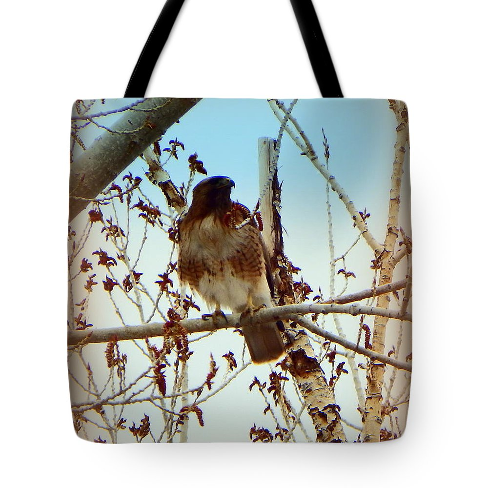 Acrylic Prints Tote Bag featuring the photograph Raptor Perched by Bobbee Rickard