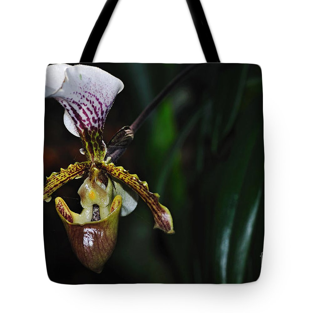 Photography Tote Bag featuring the photograph Rare Orchid - Paphiopedilum Gratrixianum by Kaye Menner