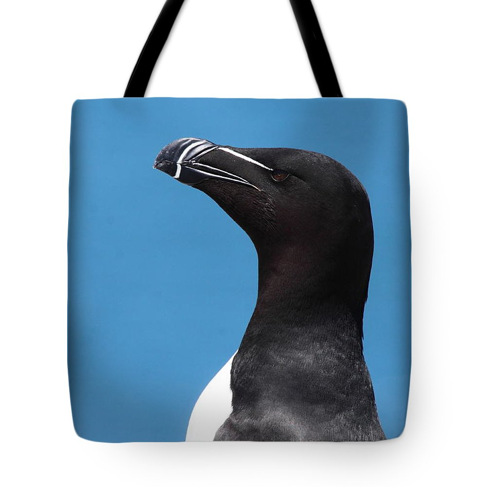 Razorbill Tote Bags