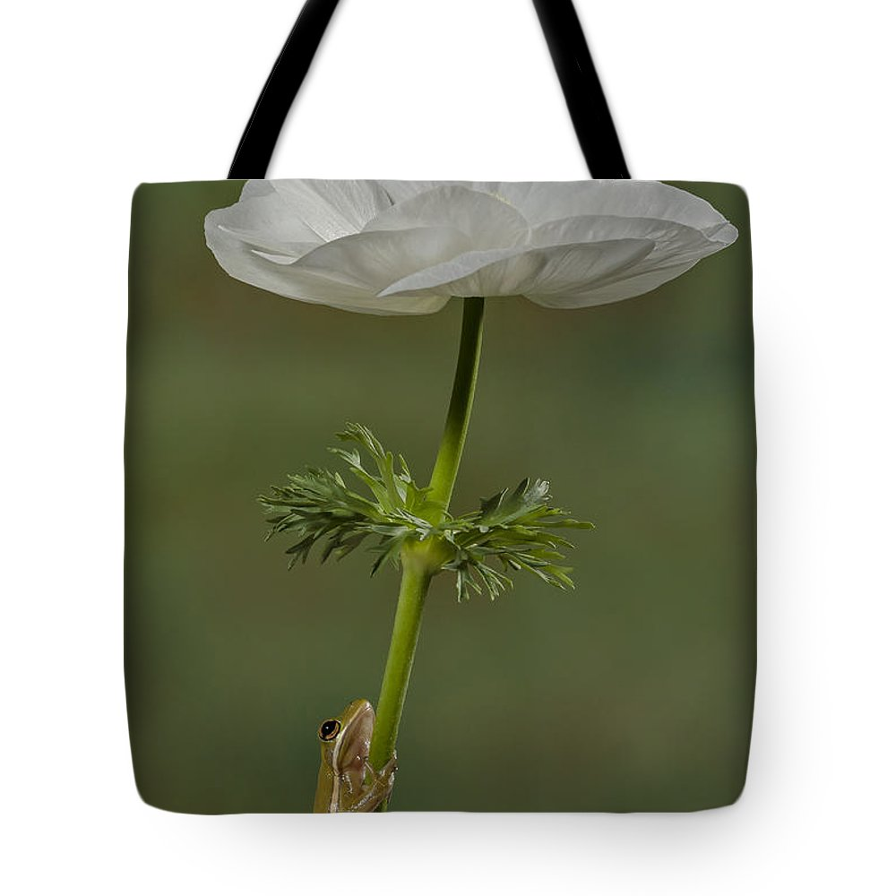 Frog Tote Bag featuring the photograph Reaching To The Top by Susan Candelario
