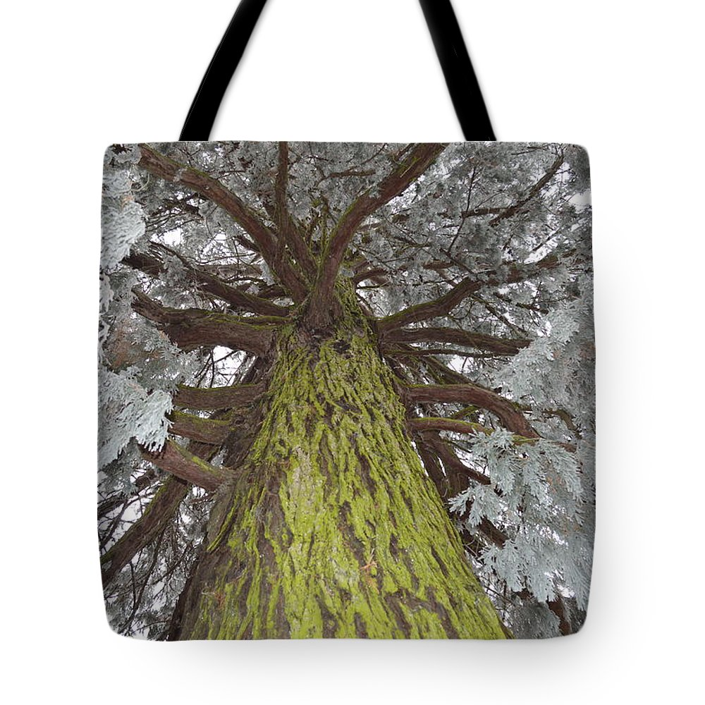 Nature Tote Bag featuring the photograph Ready For Christmas by Felicia Tica