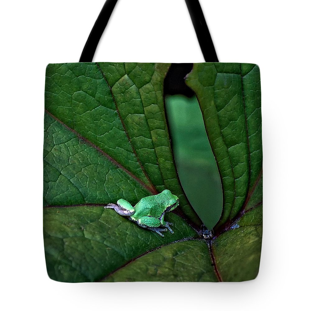 Leaf Tote Bag featuring the photograph Really In The Groove by Steve Harrington