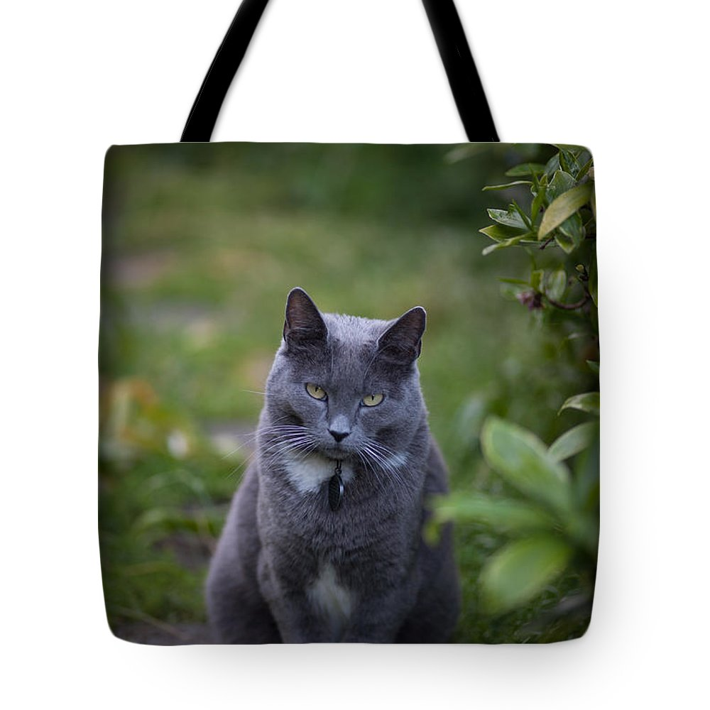 Cat Tote Bag featuring the photograph Really Now by Mike Reid