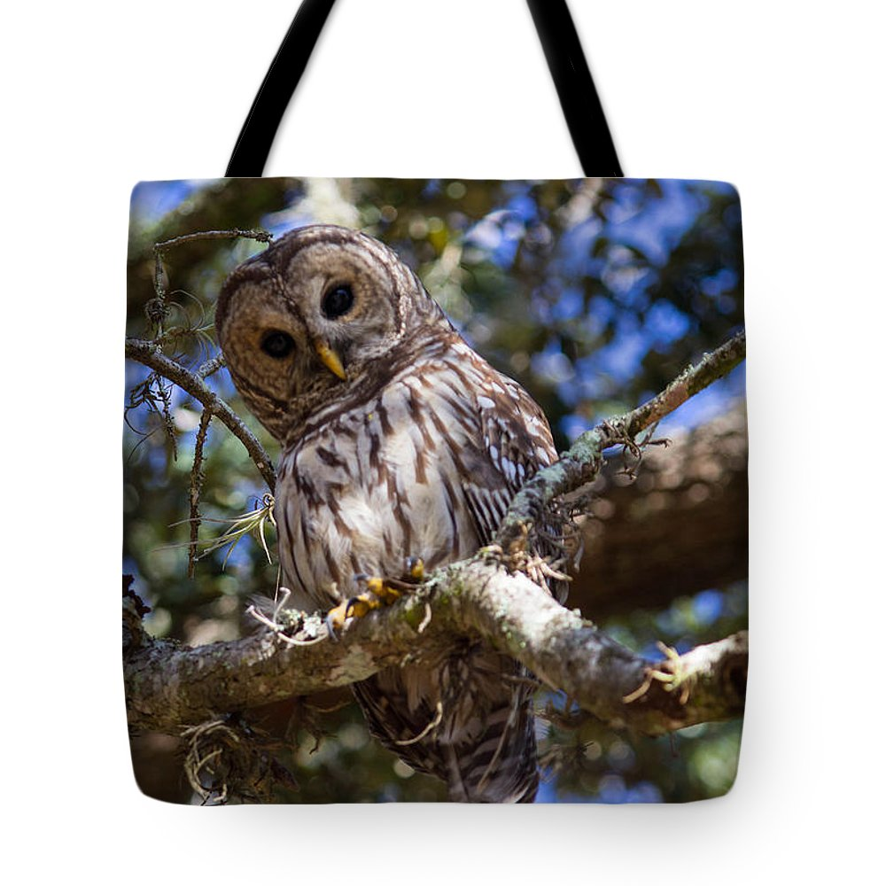 Barred Owl Tote Bag featuring the photograph Are You Talking To Me? by Patti Colston