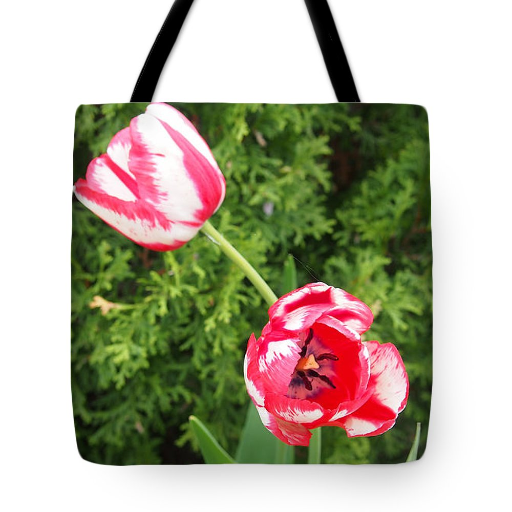 Tulips Tote Bag featuring the photograph Red And White Tulips by Thomas Wasson