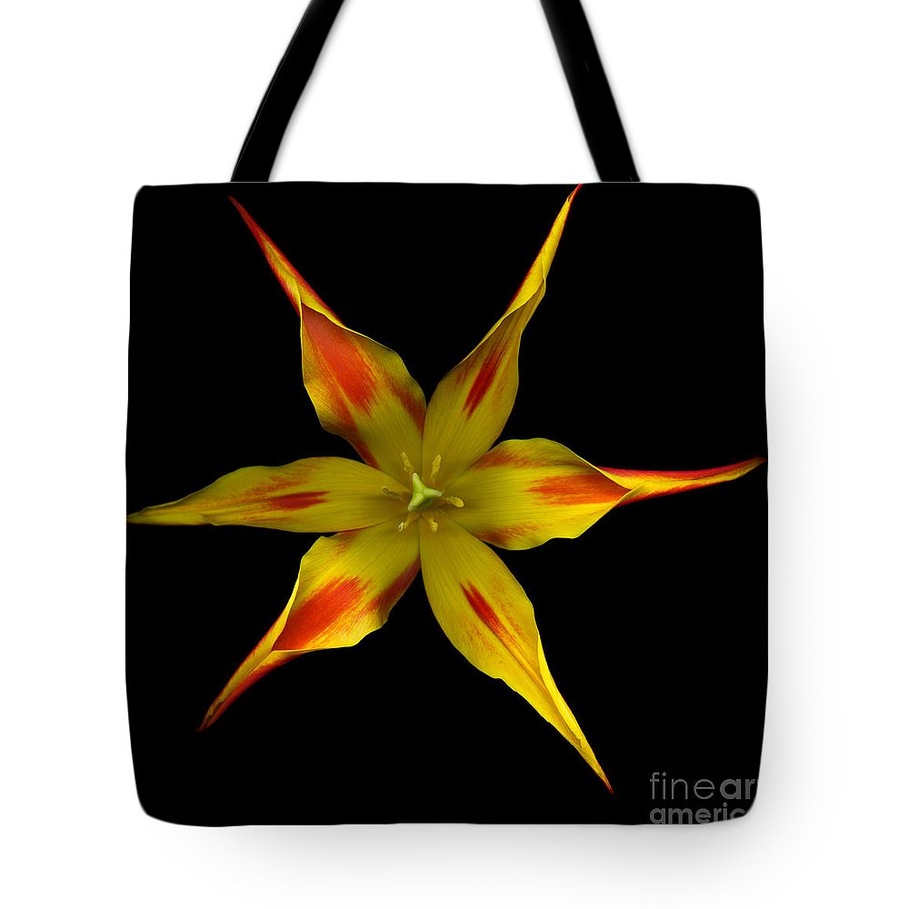 Beauty In Nature Tote Bag featuring the photograph Red And Yellow Spiked Tulip by Oscar Gutierrez