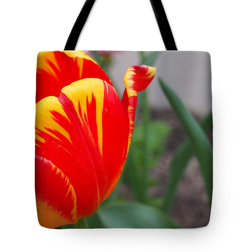 Red And Yellow Tulip Tote Bag featuring the photograph Red And Yellow Tulip by Thomas Wasson