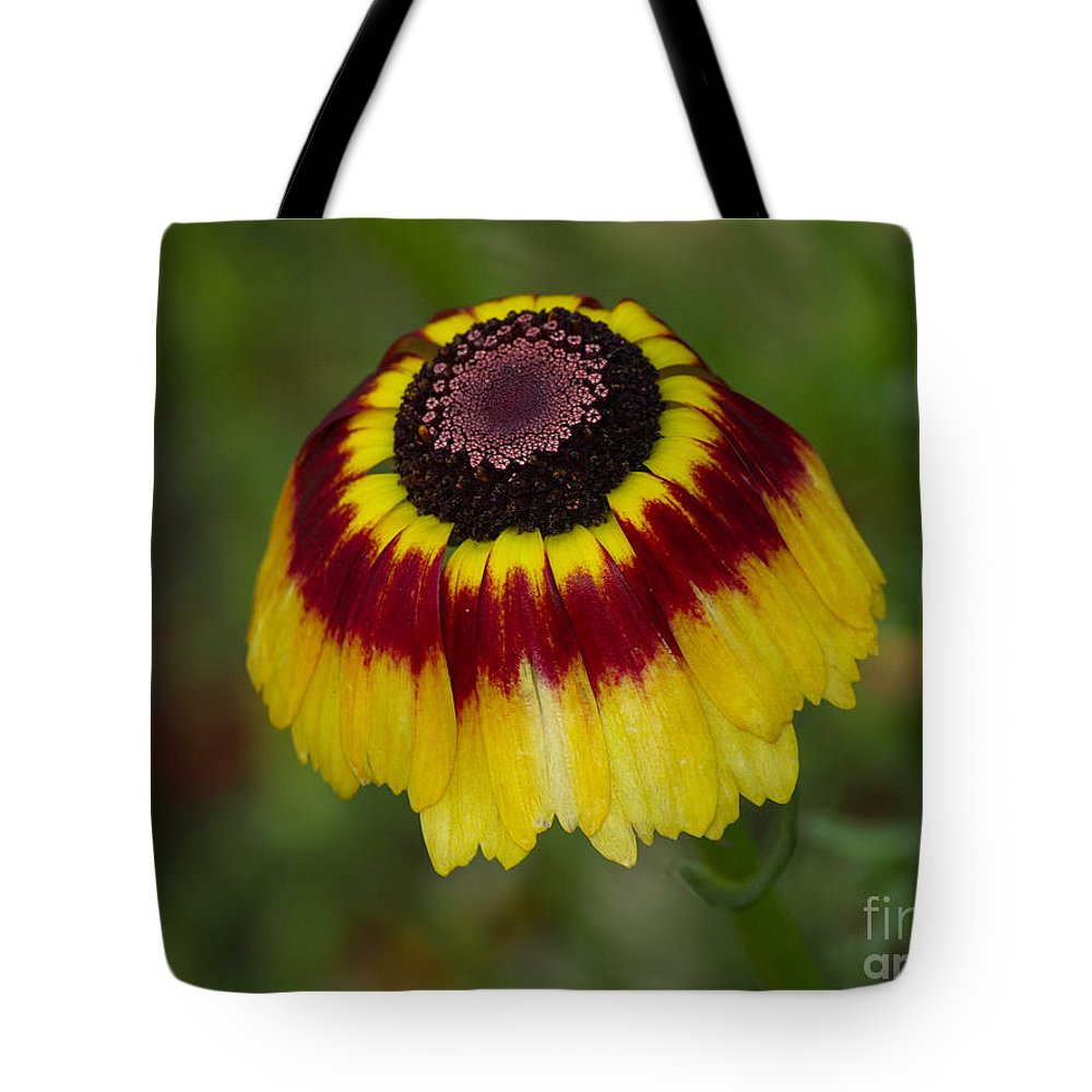 Red Tote Bag featuring the photograph Red Band by Brothers Beerens