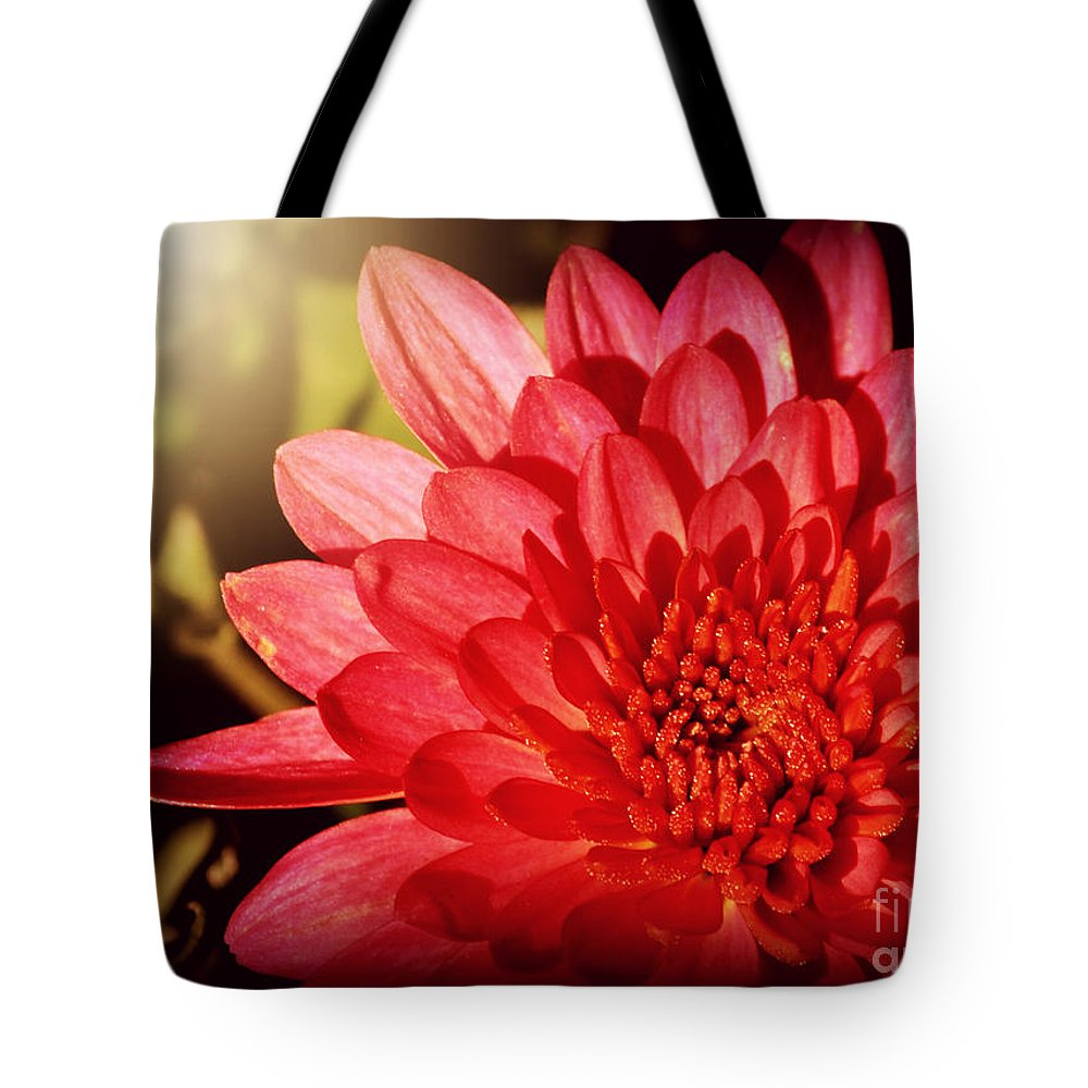 Flowers Tote Bag featuring the photograph Red Beauty Welcomes The Sun - Flowers Of Summer by Miriam Danar