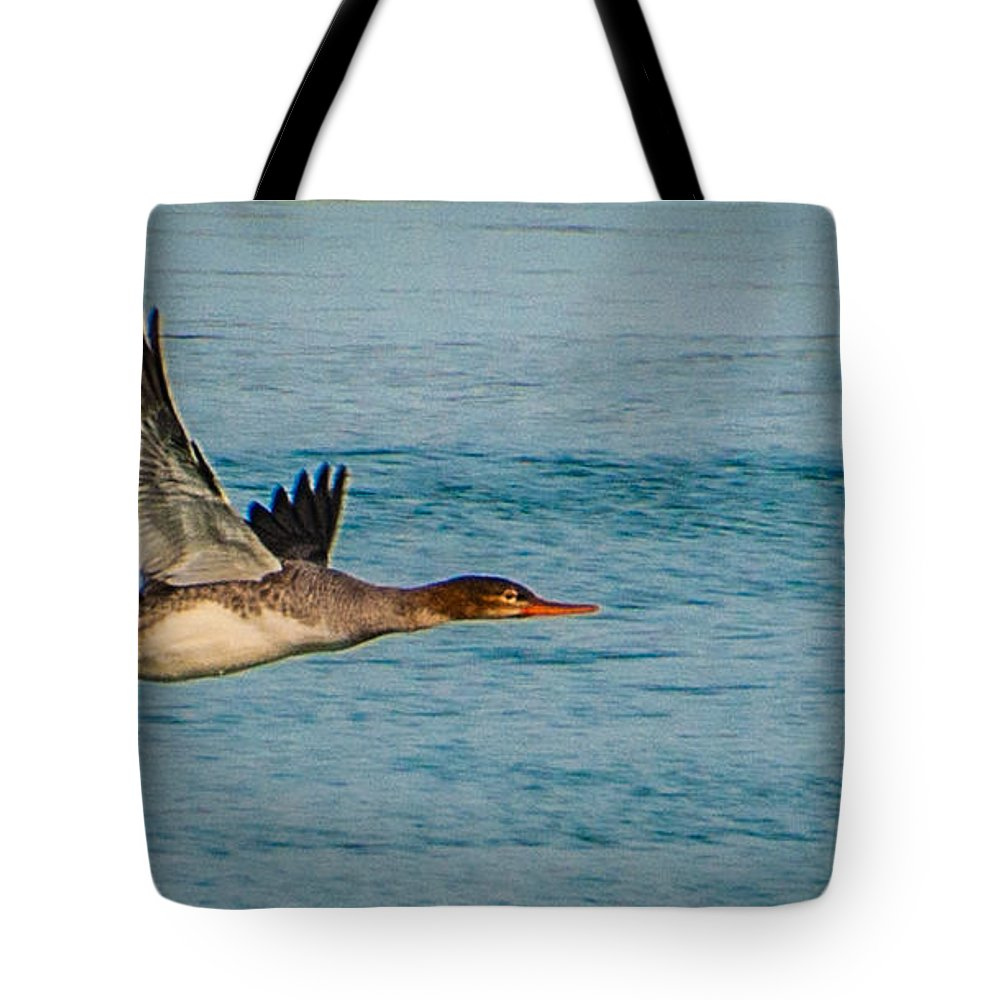 Merganser Tote Bag featuring the photograph Red Breasted Merganser In Flight by Ronald Grogan