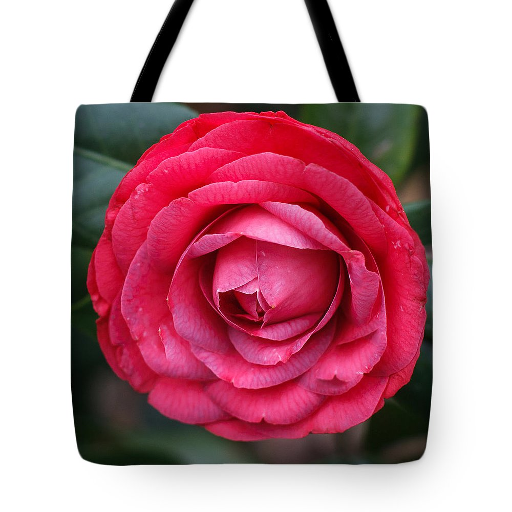 Florida Tote Bag featuring the photograph Red Camellia by Jane Luxton