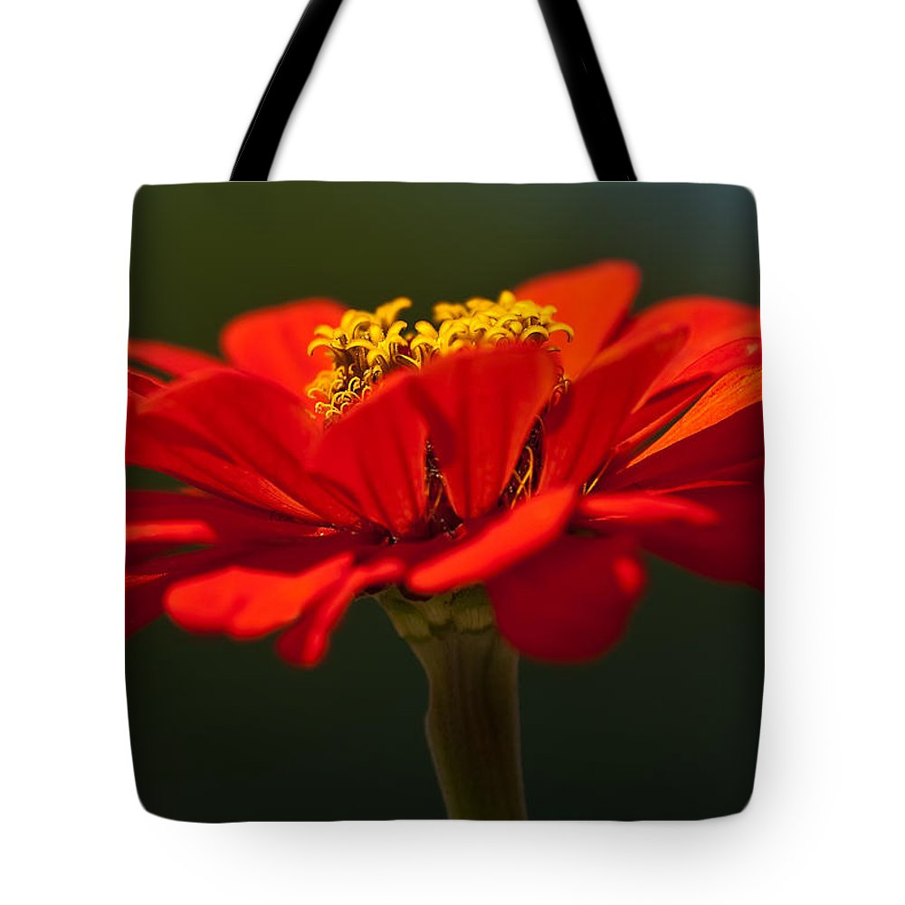 Zinnia Tote Bag featuring the photograph A Bee's Eye View by Onyonet Photo Studios